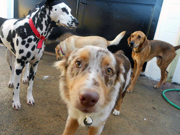 dog daycare group
