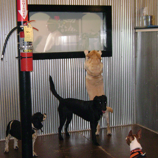 dog daycare curious