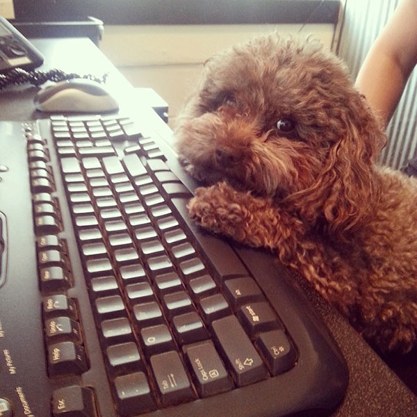cute dog at keyboard